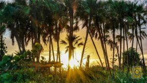 Things To Do in Hopkins, Belize: Sunset behind palm trees along the beach in Hopkins, Belize.