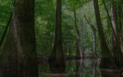 Tips for Visiting Congaree National Park