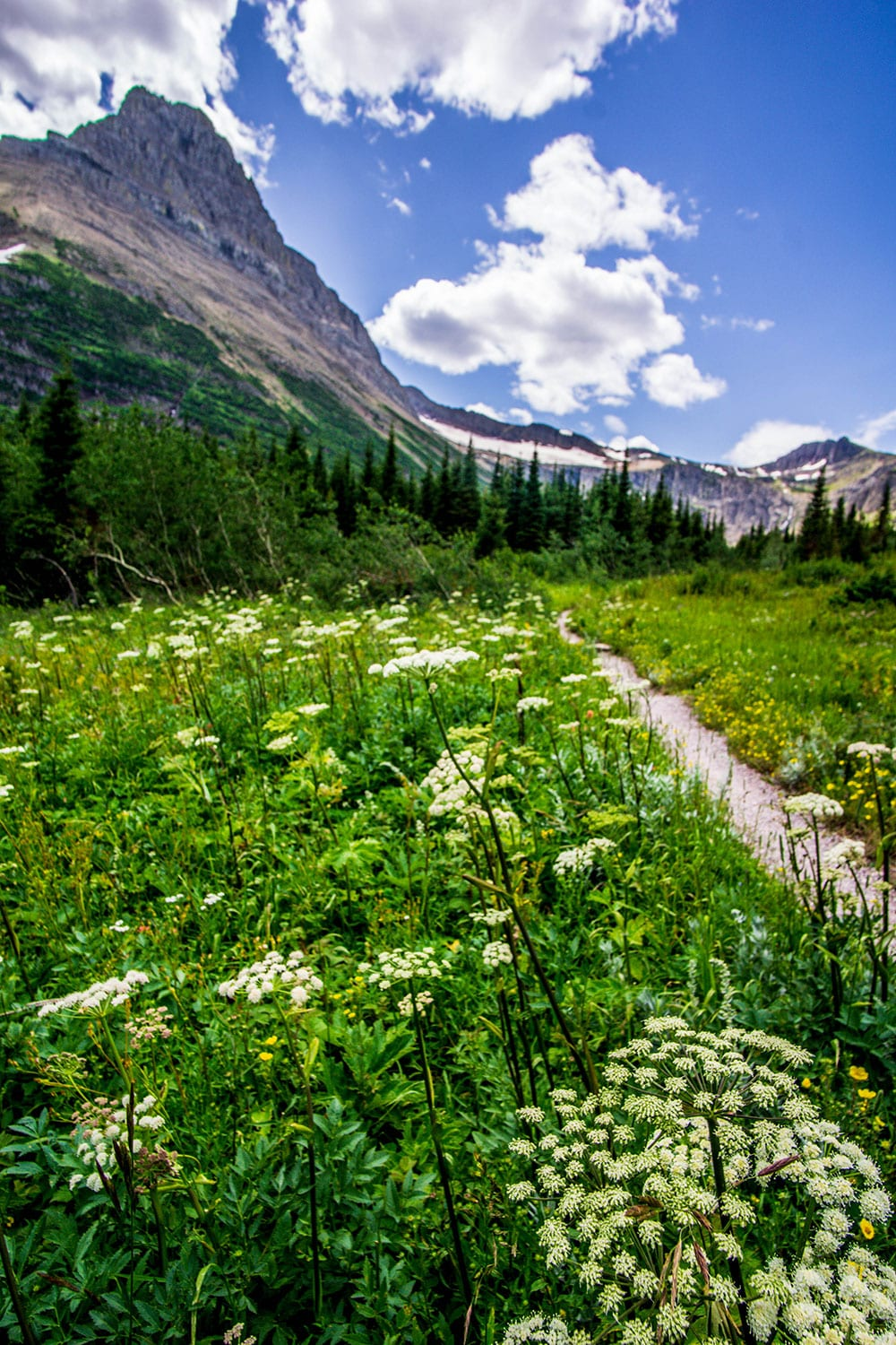 visiting glacier national park: a peaceful part of the trail to Iceberg Lake